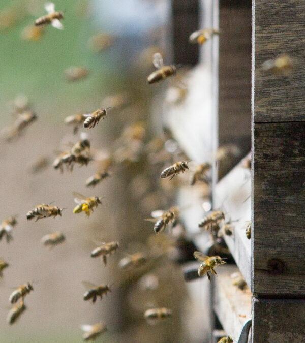 Unsere Bienen sammeln Bienenprodukte